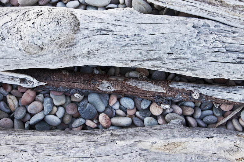 Driftwood. On a colorful pebble beach stock image