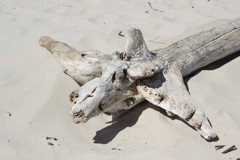 driftwood royalty-vrije stock afbeeldingen