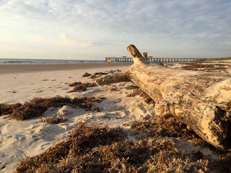 driftwood стоковая фотография rf