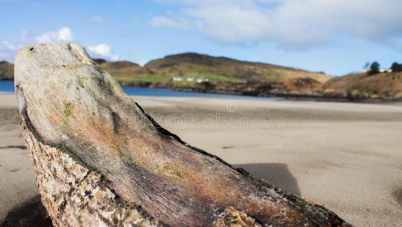 driftwood royalty-vrije stock foto
