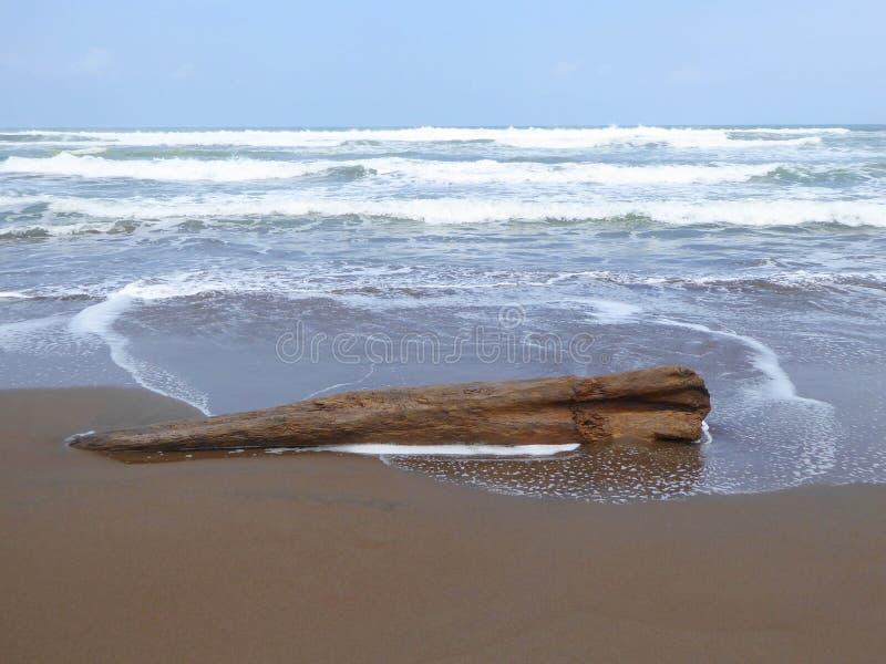 driftwood image libre de droits