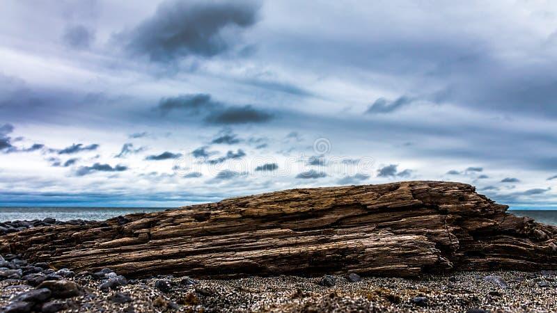 driftwood imagenes de archivo
