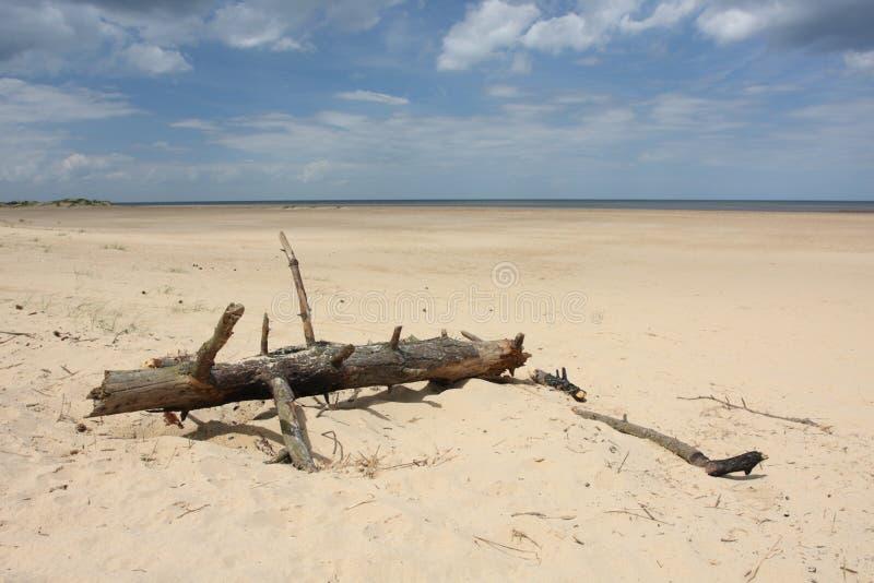 driftwood arkivfoton