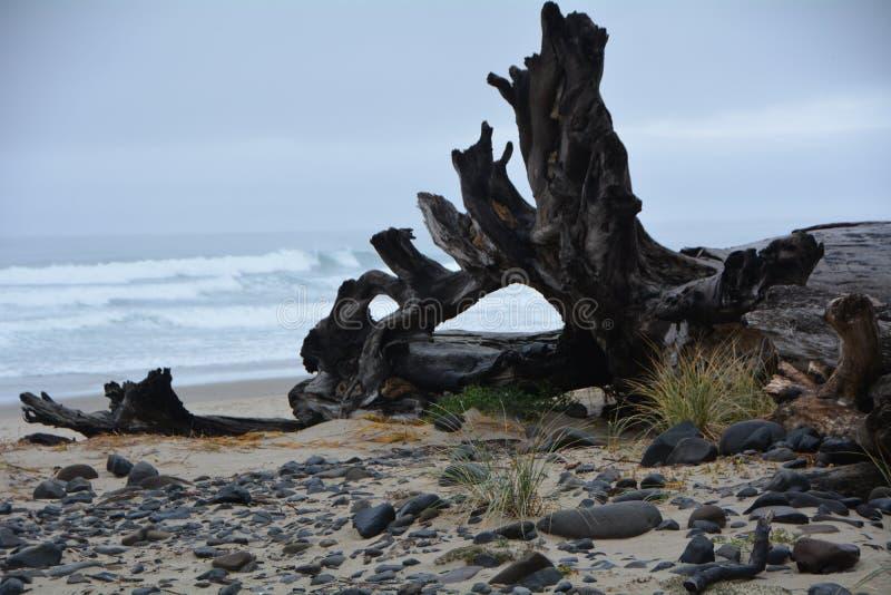 Driftwood-Abschnitt in Cape Meares an der Oregon-Küste stockbild