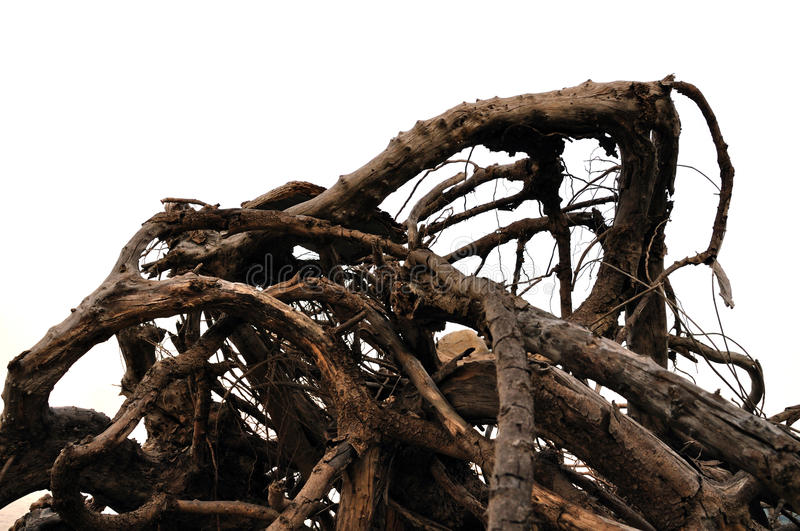 Driftwood abstract tree branches. Tangled driftwood washed ashore. Distorted tree branches abstract background royalty free stock images