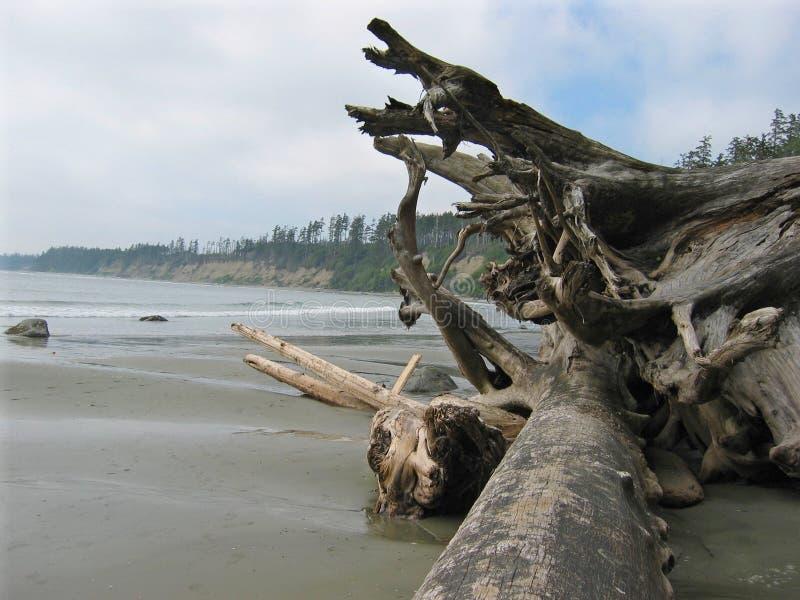 Driftwood Along Coast Royalty Free Stock Photo