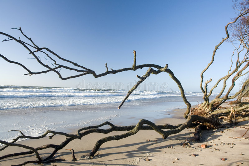 Download Driftwood on beach stock image. Image of seascape, tree - 2110591
