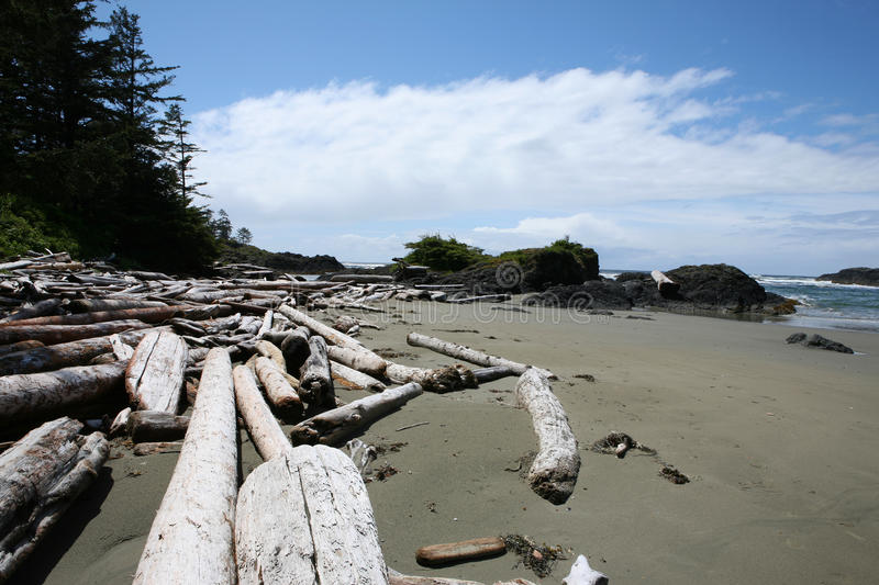 Download Driftwood beach stock photo. Image of wilderness, americas - 27645782