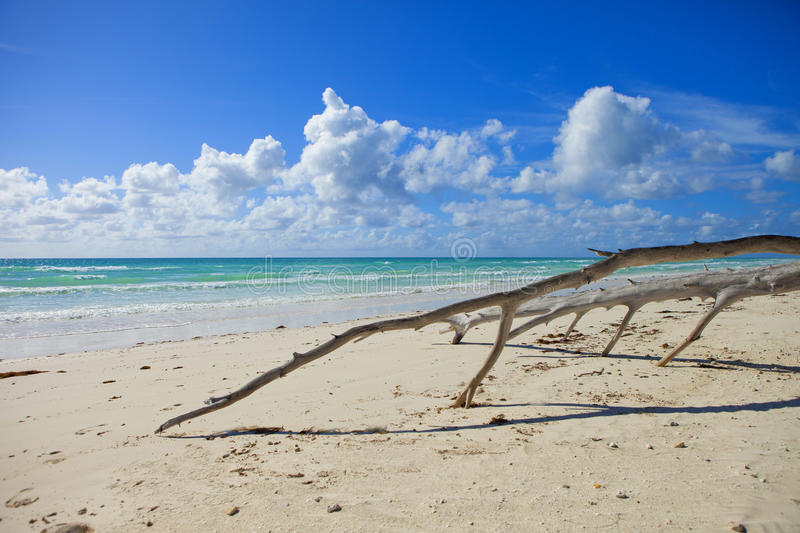 Driftwood on the beach in the bahamas. Drifwood on empty beach in the bahamas royalty free stock images