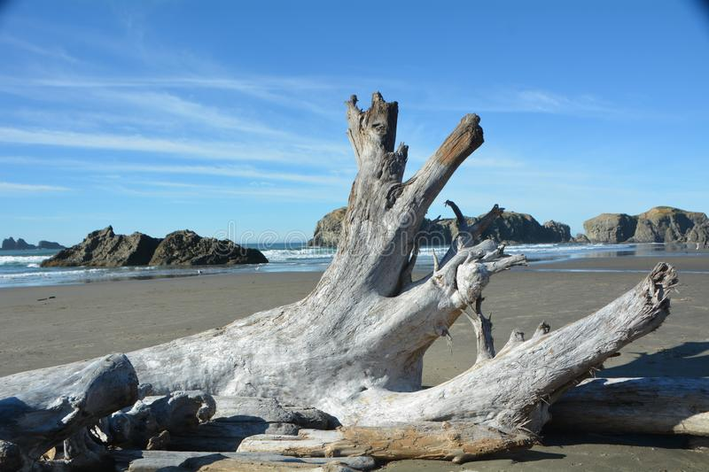 Driftwood on the beach at Bandon, Oregon. This is one of the many pieces of driftwood on the beach near Bandon, Oregon stock photography