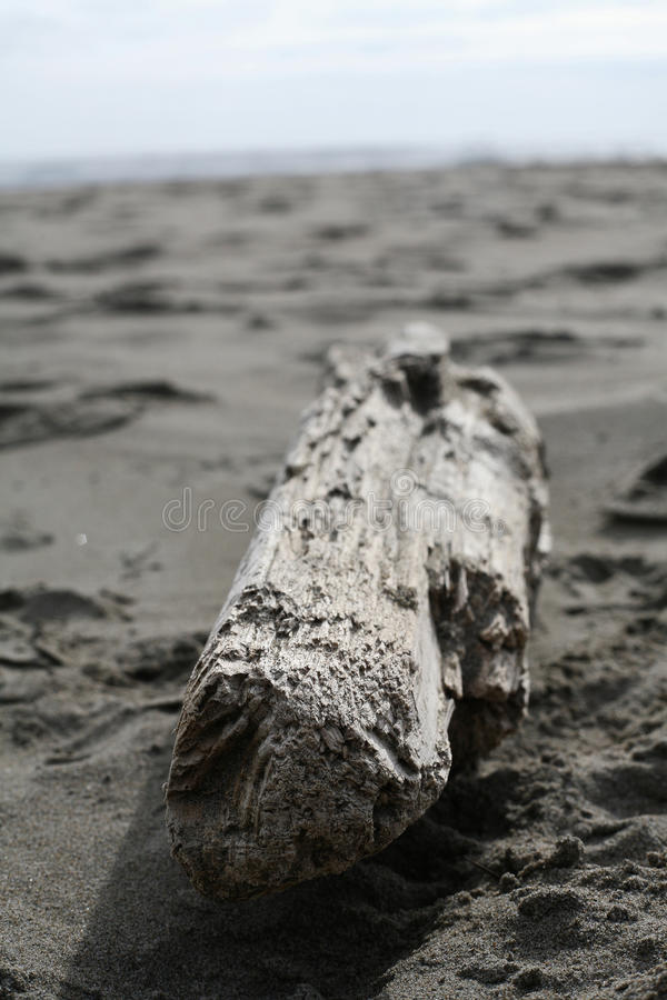 Driftwood on the beach royalty free stock images