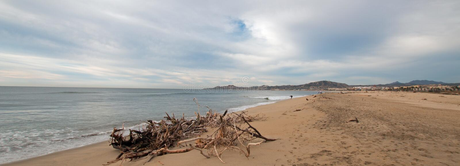 Driftwood on the beach in San Jose Del Cabo near Cabo San Lucas in Baja California Mexico royalty free stock photo