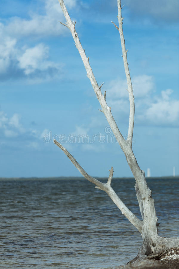 Driftwood on Beach at Sigsbee Key West Florida royalty free stock images