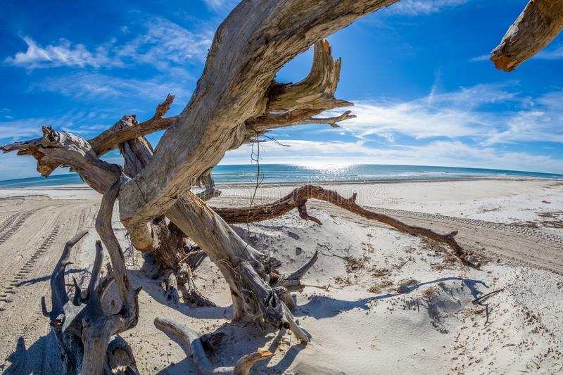 Driftwood on beach on St George Island Florida. Driftwood on Gulf of Mexico beach on St George Island in the panhandle or forgotten coast area of Florida in the stock image