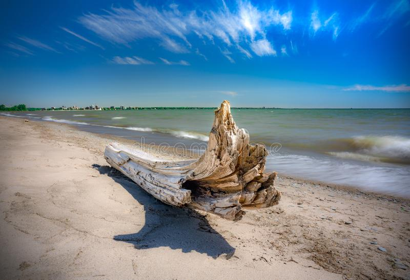 Driftwood on beach in vibrant colour, waves crashing behind stock image