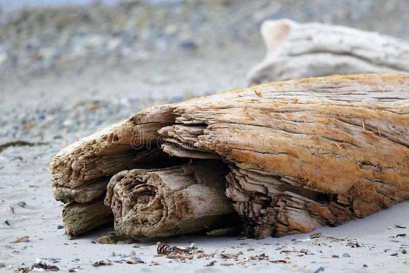 Driftwood on Beach, Witty`s Lagoon Regional Park, Vancouver Island, British Columbia stock photo