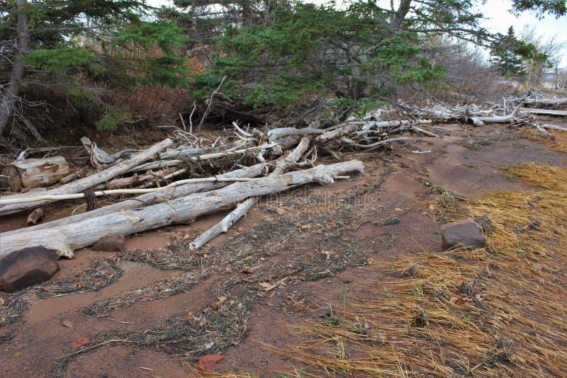Driftwood bielący biel wypiętrzający na plaży z gałęzatki, plaży trawą i obrazy stock