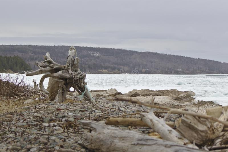 driftwood images stock