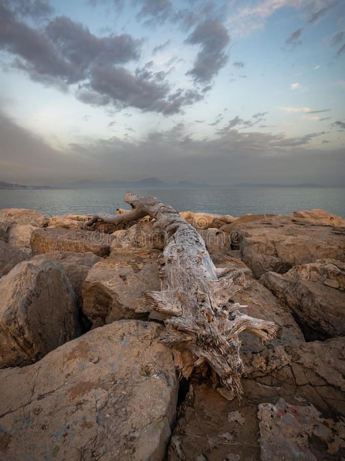 Driftwood on boulders, Posillipo, Naples, Italy at sunset. Driftwood on boulders along Posillipo coastline in Naples, Italy at sunset with cloudy skies stock photo