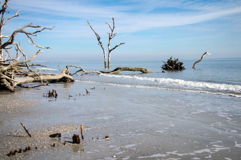 Driftwood and dead trees on the beach at Hunting Island State Park. Calm water at low tide royalty free stock image