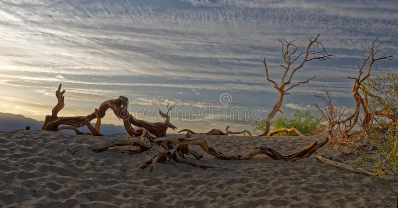 Driftwood in Death Valley, California royalty free stock photos