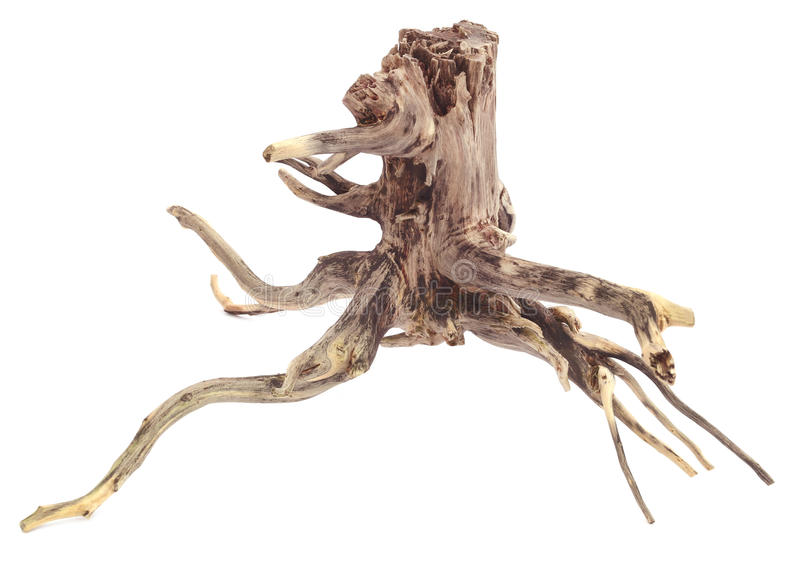 Driftwood. Decorative driftwood over white background royalty free stock photos