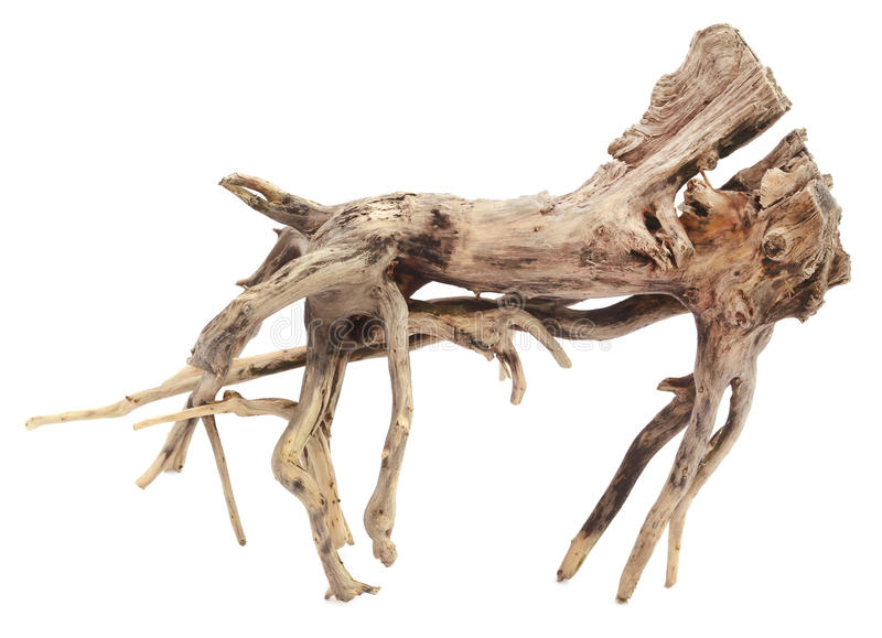 Driftwood. Decorative driftwood over white background royalty free stock images