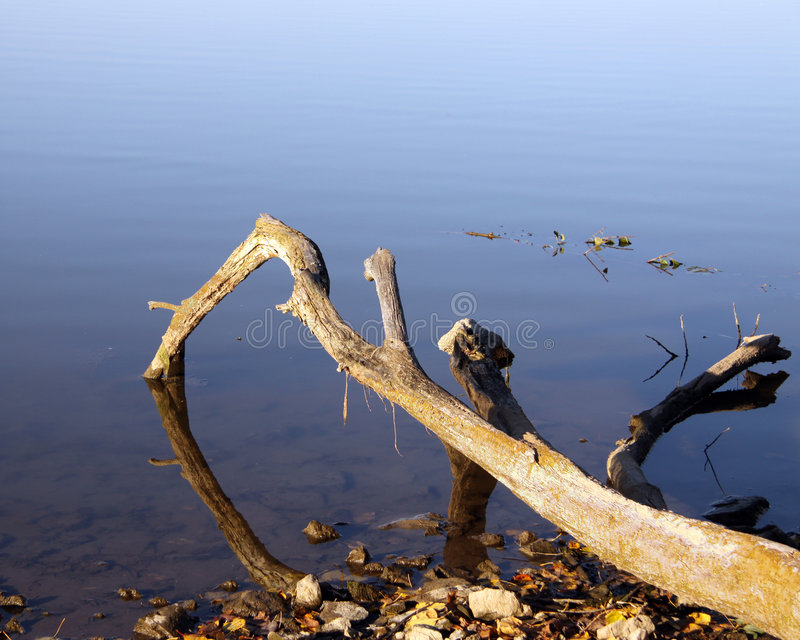 Download Driftwood Fingers stock image. Image of beautiful, trunk - 7159317