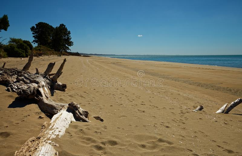 Driftwood on golden sand royalty free stock images