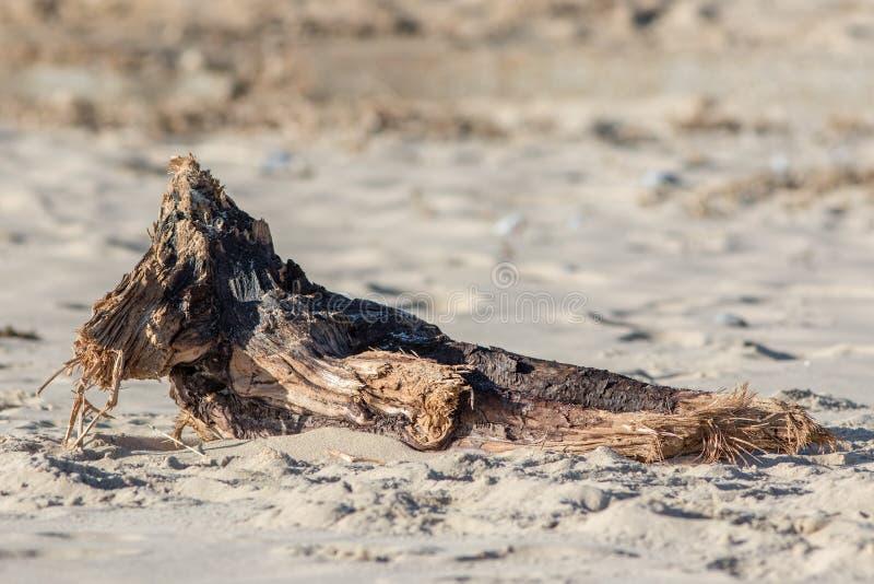 driftwood Het brok van hout waste omhoog op een strand stock foto's