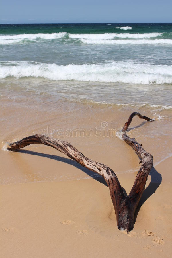 Driftwood. Interesting driftwood washed up on a beach royalty free stock photo
