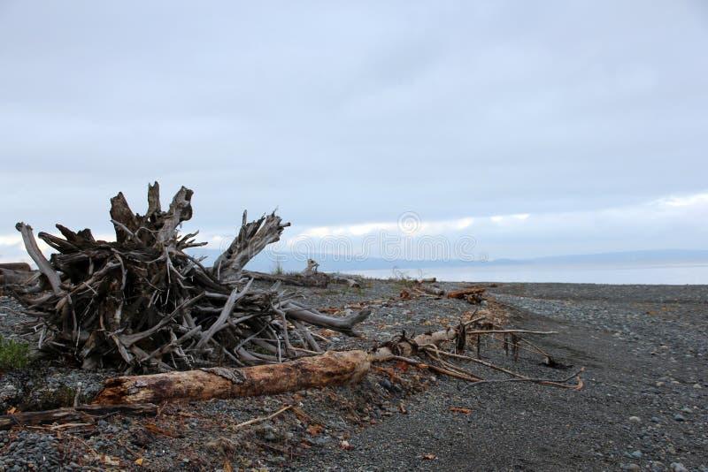 Driftwood korzenia gmatwaniny Nyle zatoczka fotografia royalty free