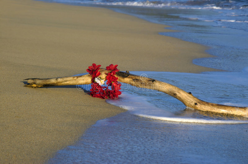 Driftwood and Lei. Driftwood lays washed ashore by the gentle waves on this beach in Kauai, Hawaii. A red flower lei hangs from it stock image