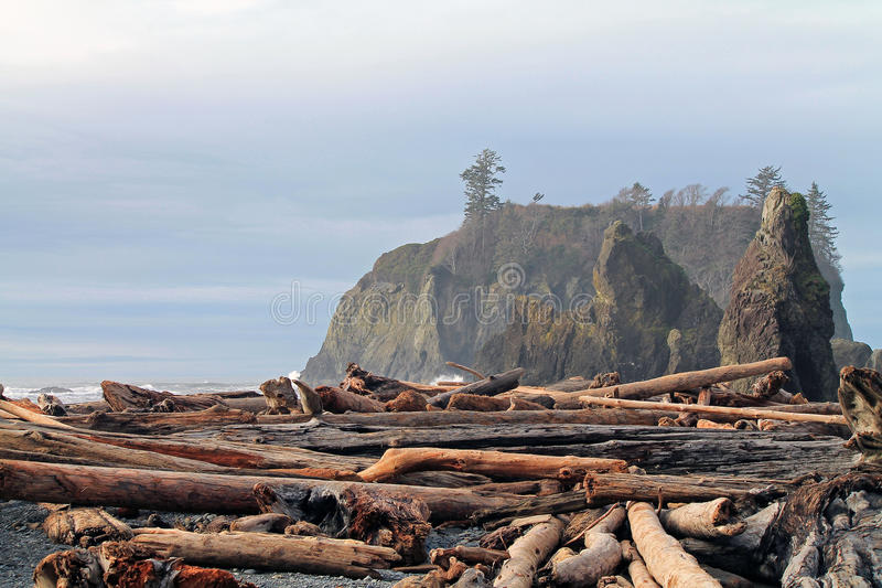 Driftwood Logs Covering a Beach with Seastacks royalty free stock photo