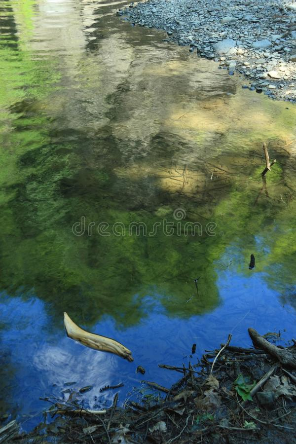 Download Driftwood In Mine Kill Pool Stock Image - Image: 15054251