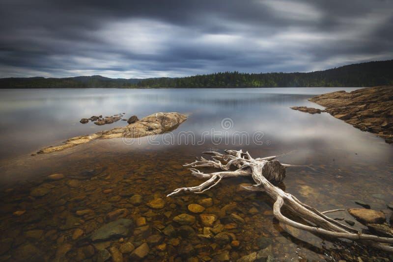 Driftwood na brzeg Foldsjoen, norweski halny las zdjęcie royalty free