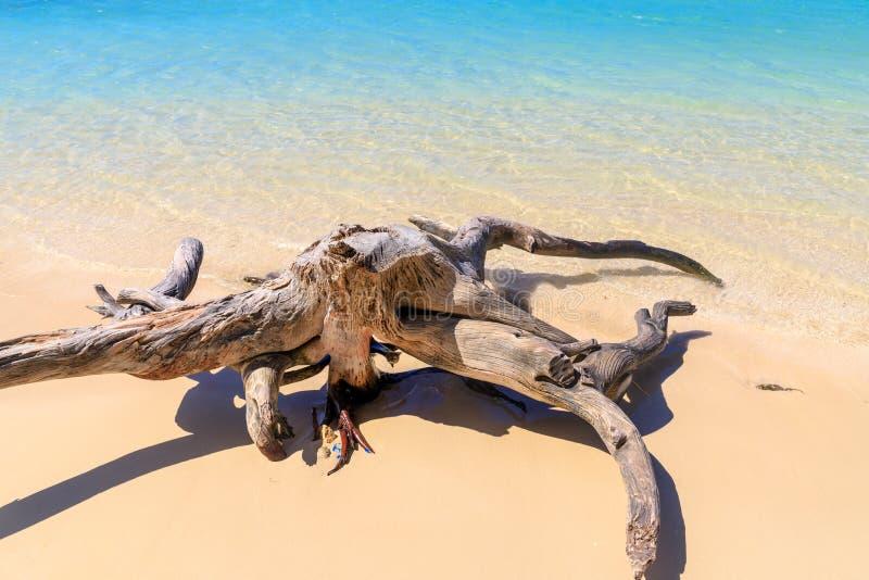 Driftwood na Karaibskiej plaży plaży świetnie piaska turkusu wody biel sunshine relaks republika dominikańska obraz stock
