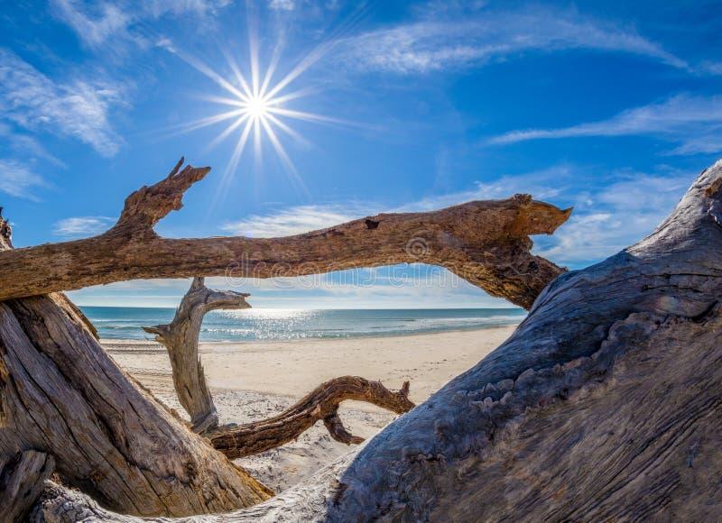 Driftwood na plaży na St George wyspie Floryda zdjęcie stock