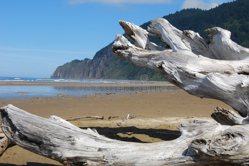 Driftwood na praia fotos de stock royalty free