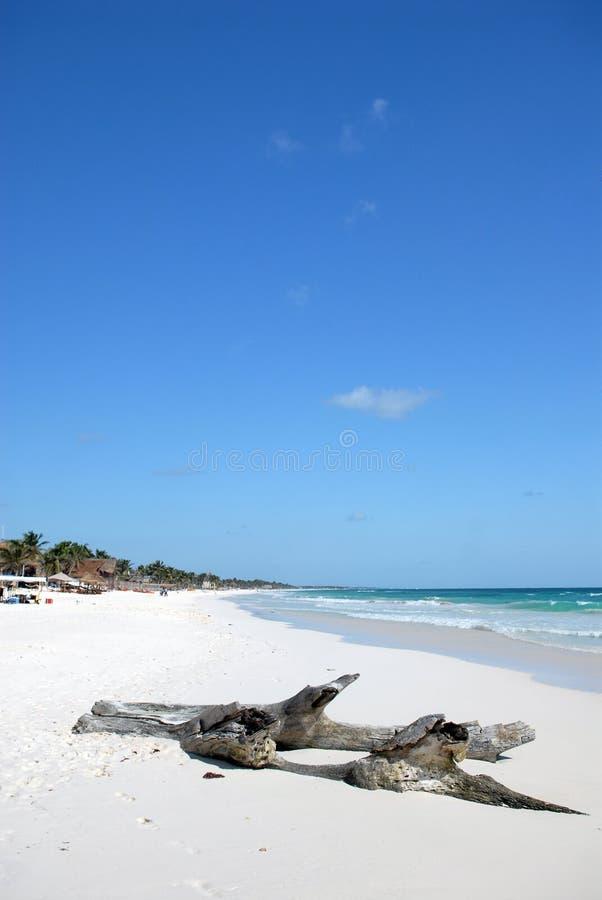 Driftwood na praia do paraíso foto de stock royalty free