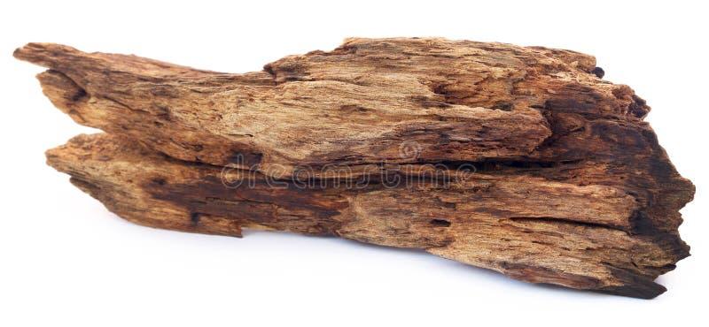 Driftwood Natual стоковое изображение rf
