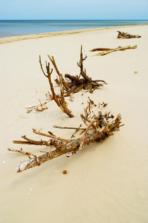 Free Driftwood On The Beach. Royalty Free Stock Photos - 53554038
