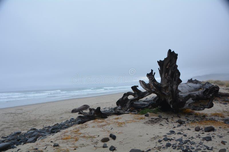 Driftwood op Kaap Meares aan de oregonkust royalty-vrije stock afbeeldingen