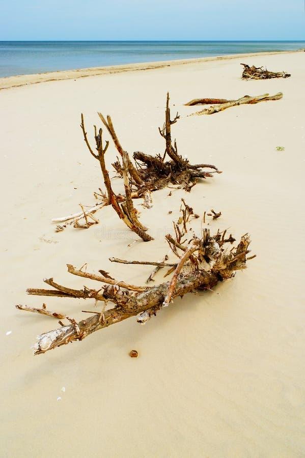 Driftwood på stranden royaltyfria foton