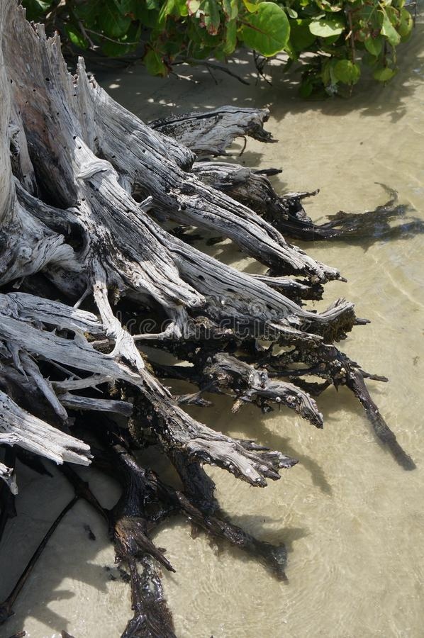 Driftwood på stranden arkivbild