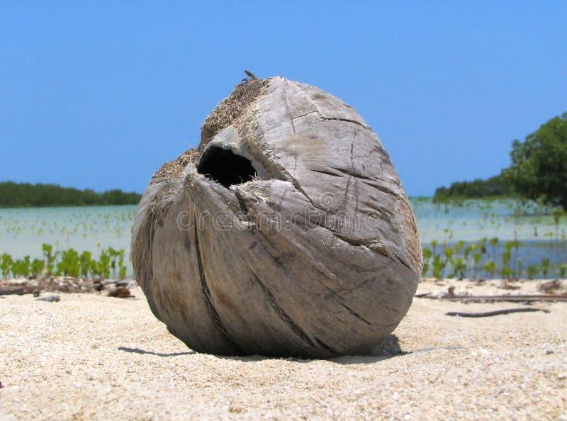 driftwood plażowy tropikalny zdjęcia royalty free