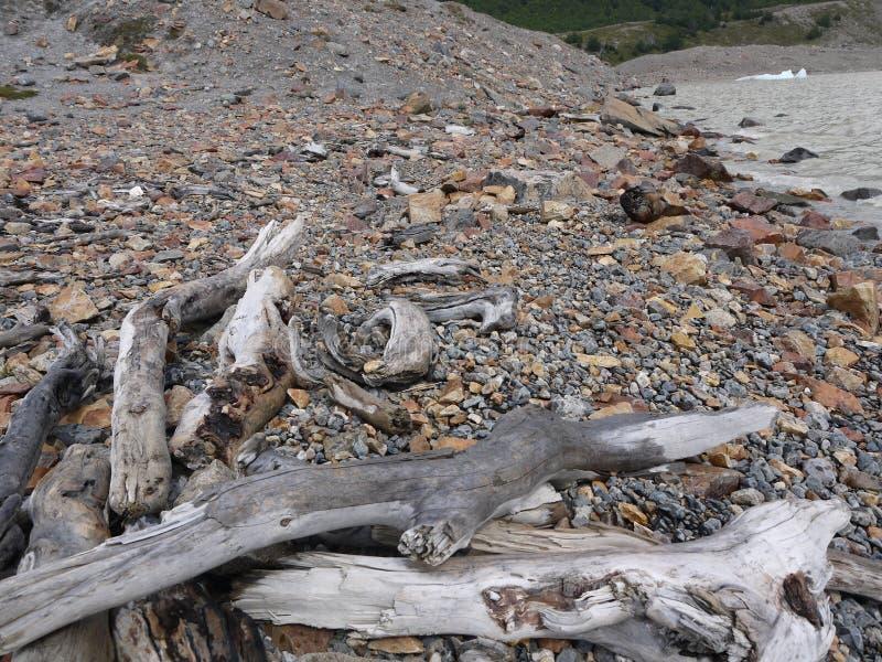 Driftwood przy glacjalnym jeziorem zdjęcia royalty free