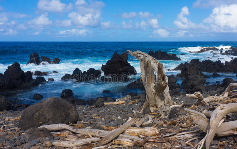 Driftwood on rugged coast royalty free stock images