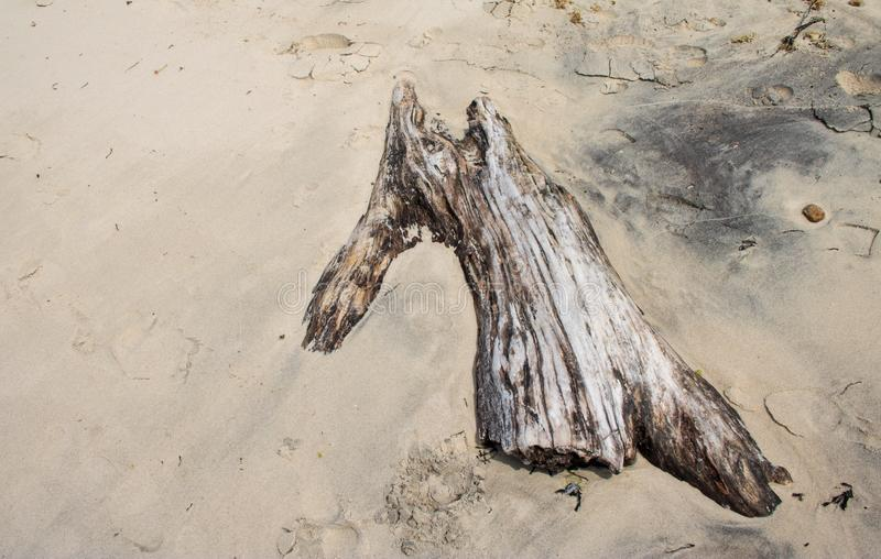 Driftwood on the sand stock photo