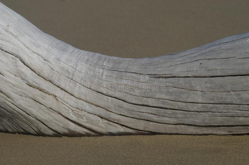 Driftwood On Sandy Beach Royalty Free Stock Photo